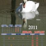 09 - лебедь